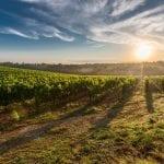 Terras drankjes - wijn uit onbekende regio's